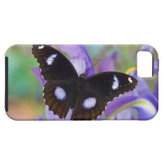 Sammamish Washington Tropical Butterflies iPhone 5 Cover