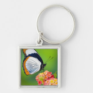 Sammamish, Washington. Tropical Butterflies Key Ring