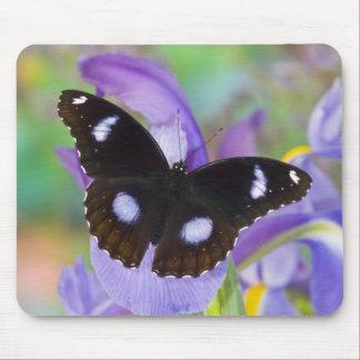 Sammamish Washington Tropical Butterflies Mouse Mat