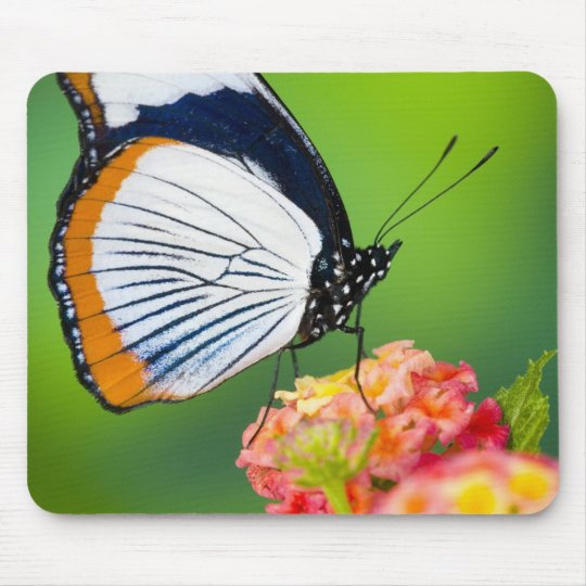 Sammamish, Washington. Tropical Butterflies Mouse Mat