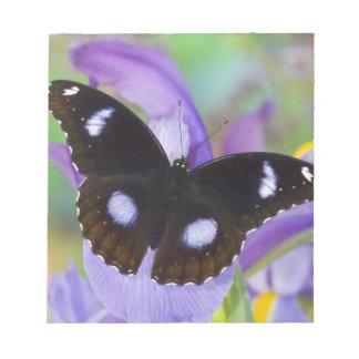 Sammamish Washington Tropical Butterflies Notepad