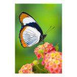 Sammamish, Washington. Tropical Butterflies Photo Art