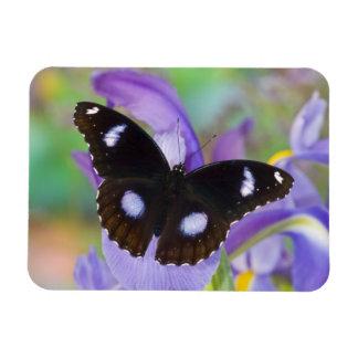Sammamish Washington Tropical Butterflies Rectangular Photo Magnet