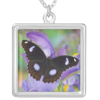 Sammamish Washington Tropical Butterflies Silver Plated Necklace