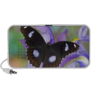 Sammamish Washington Tropical Butterflies iPhone Speakers