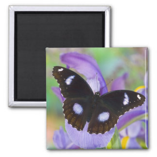 Sammamish Washington Tropical Butterflies Square Magnet