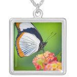 Sammamish, Washington. Tropical Butterflies Square Pendant Necklace