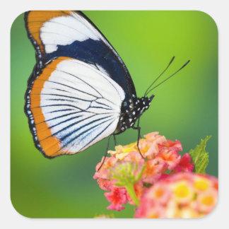 Sammamish, Washington. Tropical Butterflies Square Sticker