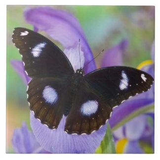 Sammamish Washington Tropical Butterflies Tile