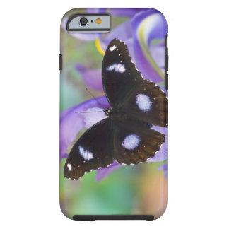 Sammamish Washington Tropical Butterflies Tough iPhone 6 Case