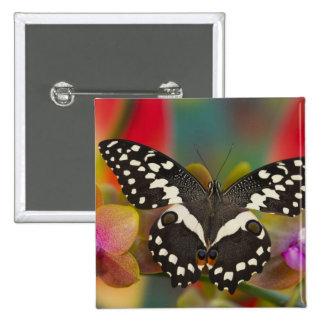 Sammamish, Washington Tropical Butterfly 10 15 Cm Square Badge
