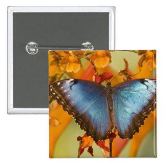 Sammamish Washington Tropical Butterfly 10 15 Cm Square Badge