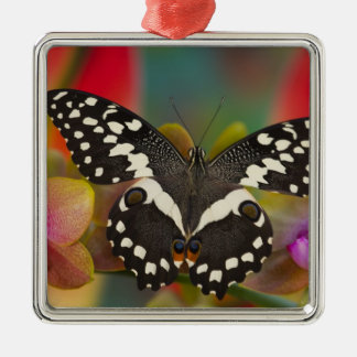 Sammamish, Washington Tropical Butterfly 10 Christmas Ornament