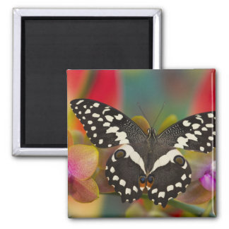 Sammamish, Washington Tropical Butterfly 10 Magnet