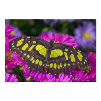 Sammamish, Washington Tropical Butterfly 10 Photo Print