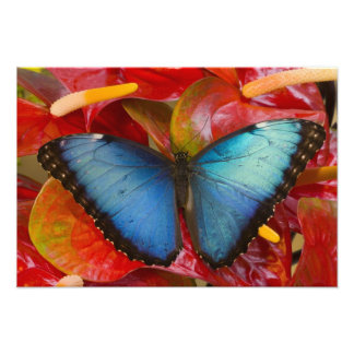 Sammamish Washington Tropical Butterfly 10 Photo Print
