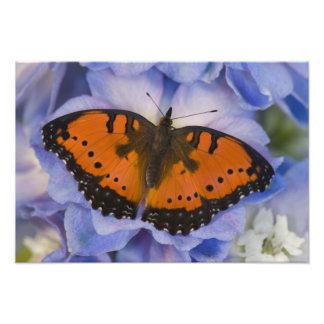 Sammamish Washington Tropical Butterfly 10 Photo Print