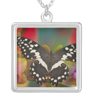 Sammamish, Washington Tropical Butterfly 10 Silver Plated Necklace