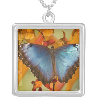 Sammamish Washington Tropical Butterfly 10 Square Pendant Necklace