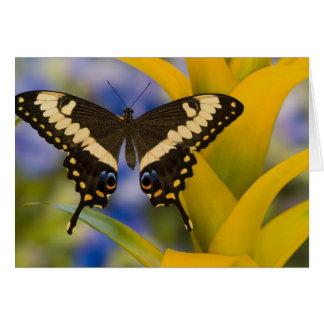 Sammamish, Washington Tropical Butterfly 11 Card