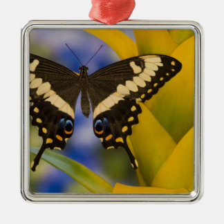 Sammamish, Washington Tropical Butterfly 11 Christmas Ornament