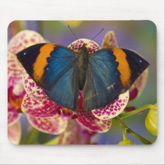 Sammamish Washington Tropical Butterfly 11 Mouse Mat