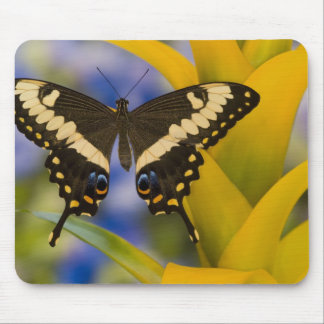 Sammamish, Washington Tropical Butterfly 11 Mouse Mat