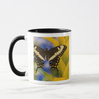 Sammamish, Washington Tropical Butterfly 11 Mug