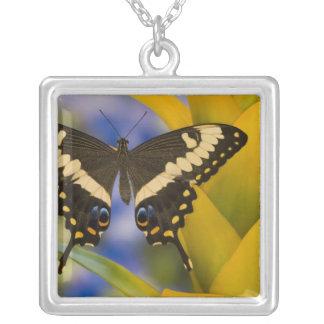 Sammamish, Washington Tropical Butterfly 11 Pendants