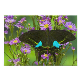 Sammamish, Washington Tropical Butterfly 11 Photo Print