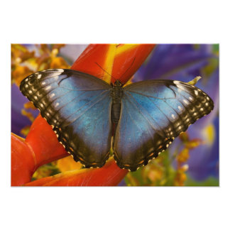 Sammamish Washington Tropical Butterfly 11 Photo Print