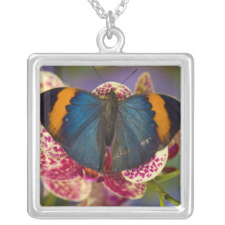 Sammamish Washington Tropical Butterfly 11 Silver Plated Necklace