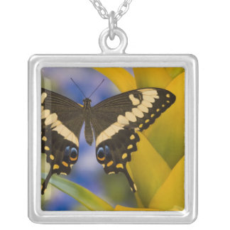 Sammamish, Washington Tropical Butterfly 11 Silver Plated Necklace