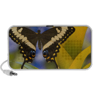 Sammamish, Washington Tropical Butterfly 11 Portable Speakers