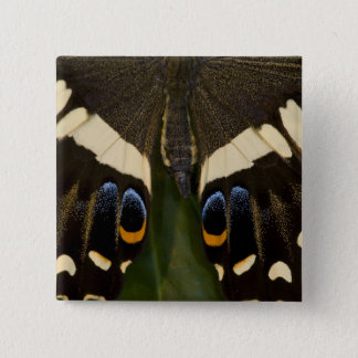 Sammamish, Washington Tropical Butterfly 12 15 Cm Square Badge