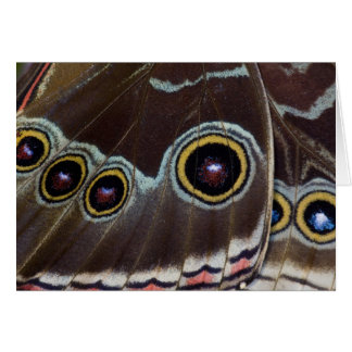 Sammamish Washington Tropical Butterfly 12 Card