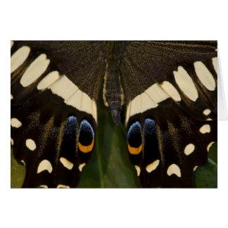 Sammamish, Washington Tropical Butterfly 12 Card