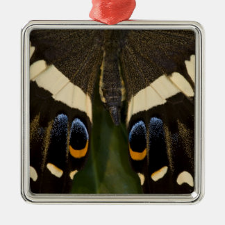 Sammamish, Washington Tropical Butterfly 12 Christmas Ornament