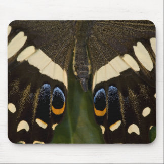 Sammamish, Washington Tropical Butterfly 12 Mouse Mat