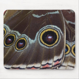 Sammamish Washington Tropical Butterfly 12 Mouse Mat