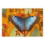 Sammamish Washington Tropical Butterfly 12 Photo Print
