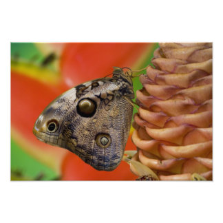 Sammamish, Washington Tropical Butterfly 12 Photo Print