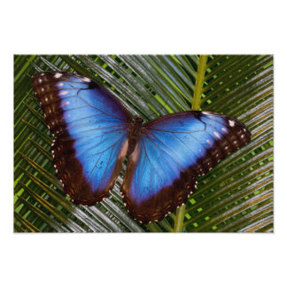 Sammamish Washington Tropical Butterfly 12 Photo Print