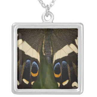 Sammamish, Washington Tropical Butterfly 12 Square Pendant Necklace
