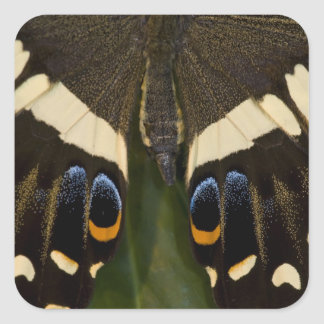 Sammamish, Washington Tropical Butterfly 12 Square Sticker