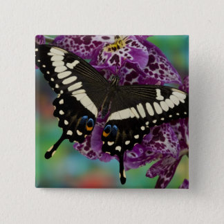 Sammamish, Washington Tropical Butterfly 13 15 Cm Square Badge