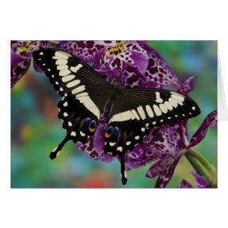 Sammamish, Washington Tropical Butterfly 13 Card