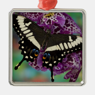 Sammamish, Washington Tropical Butterfly 13 Christmas Ornament