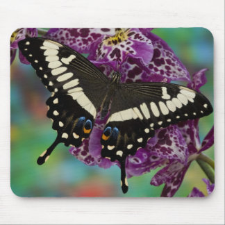 Sammamish, Washington Tropical Butterfly 13 Mouse Mat