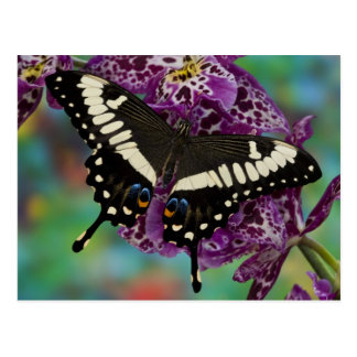 Sammamish, Washington Tropical Butterfly 13 Postcard